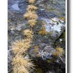 Dried Grass and Lichens