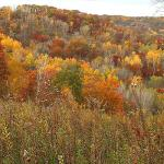 Goodhue County Fall